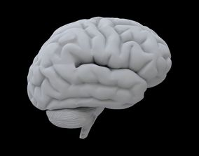 anatomy 3D model Brain