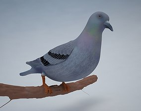 Pigeon Bird 3D model