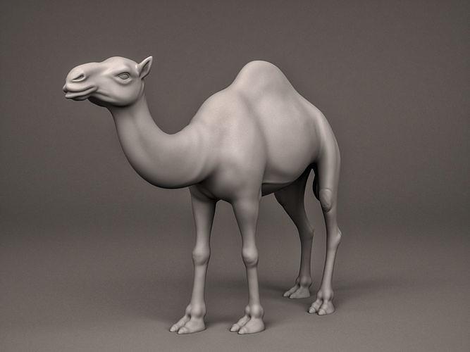 camel 3d model obj mtl stl 1
