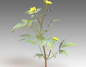 3D model Ranunculus flower
