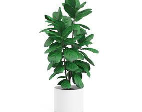 Plant Tree 14 3D model