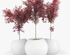 Japanese Maple Concrete planter round modular 3D model