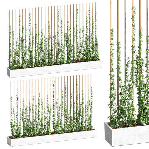 ivy partition in a rectangular pot - 2 models 3d model max obj mtl fbx 1