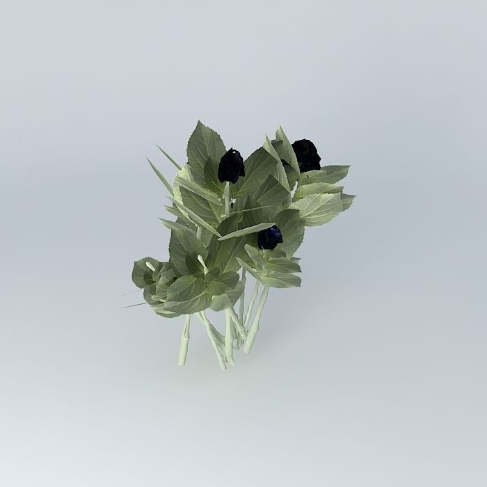 hortensia 3d hydrangea macrophylla arbre a 3d model