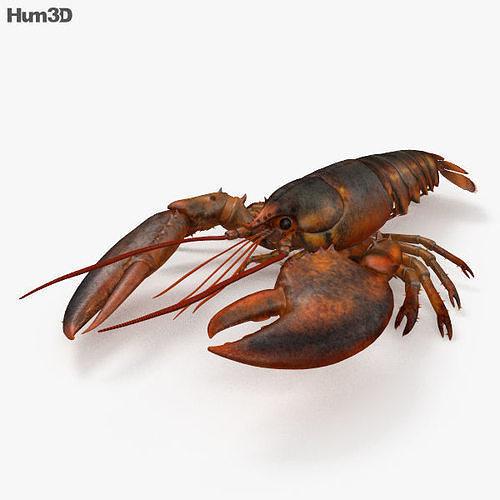 lobster hd 3d model max obj mtl 3ds fbx c4d lwo lw lws 1