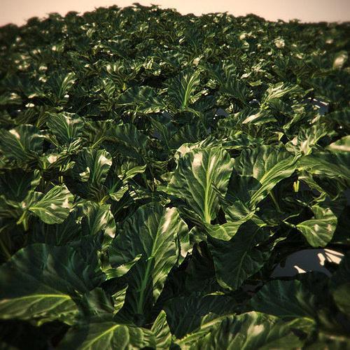 hq-vegetation - plant 1 3d model max obj mtl fbx lwo lw lws ma mb hrc xsi 1