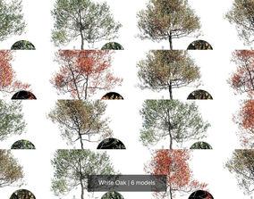 White Oak 3D