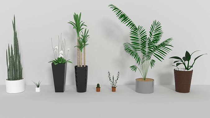 indoor plants 3d model obj mtl 3ds fbx blend dae 1