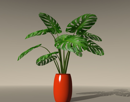 Swiss Cheese Plant 3D Model