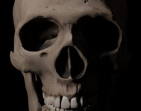 3D model Human Skull skeletal