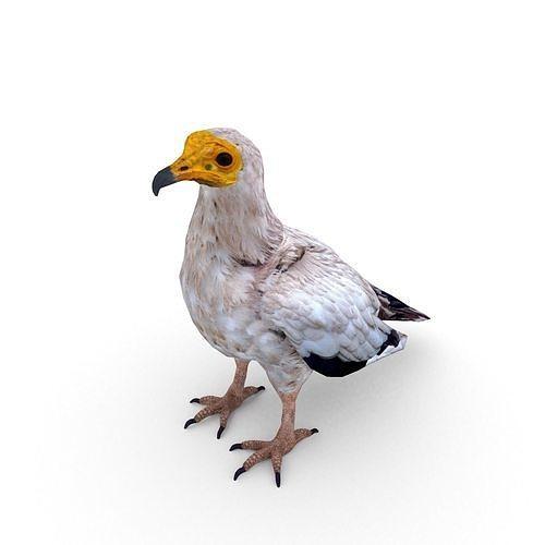 egyptian vulture neophron percnopterus 3d model max obj mtl fbx c4d blend dae 1