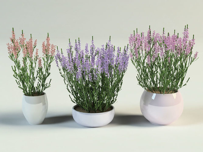 ling heather calluna set in pot 3d model max obj mtl 3ds fbx 1