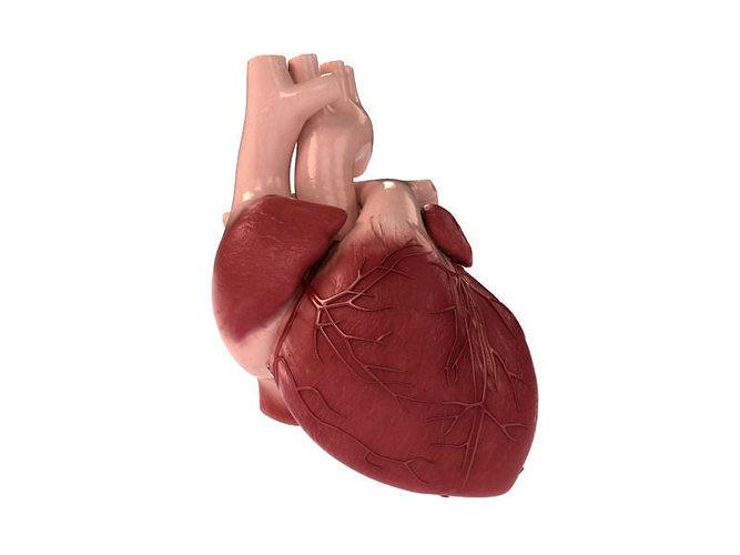 detailed 3d human heart 3d model max obj 3ds fbx stl unitypackage 1