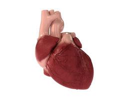 Detailed 3D Human Heart 3D Model
