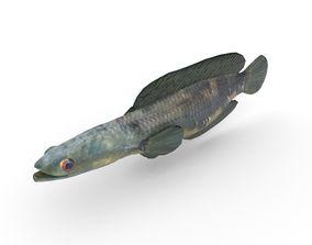 Snakehead Fish 3D model