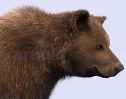 Bear-Maya 3D Model