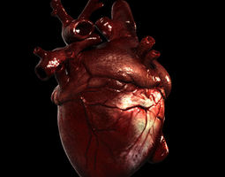 Heart Realistic Production 3D Model