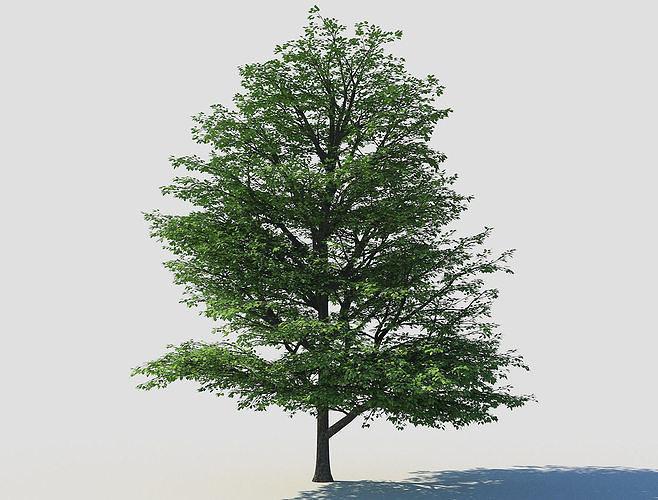 deciduous tree 1 3d model max 1
