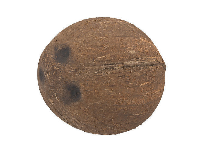 photorealistic coconut 3d scan 3d model obj mtl fbx c4d 1