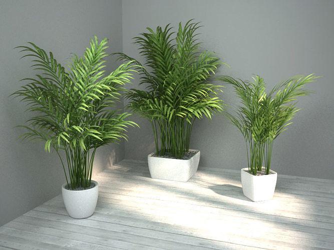 palm set 3d model max obj mtl 3ds fbx 1