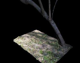 trunk Big Tree 3D model
