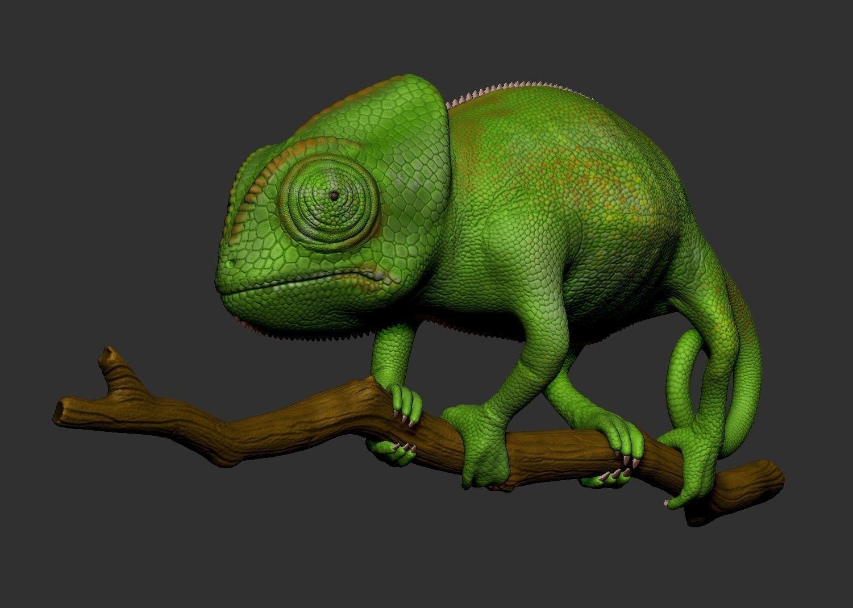 Veiled Chameleon - Hi-polygon 3D model