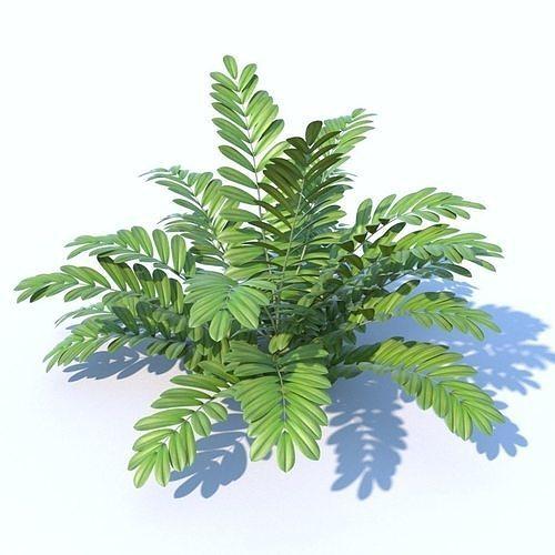 cardboard palm plant 3d model max obj mtl fbx 1
