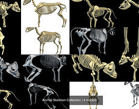 3D bones Animal Skeleton Collection