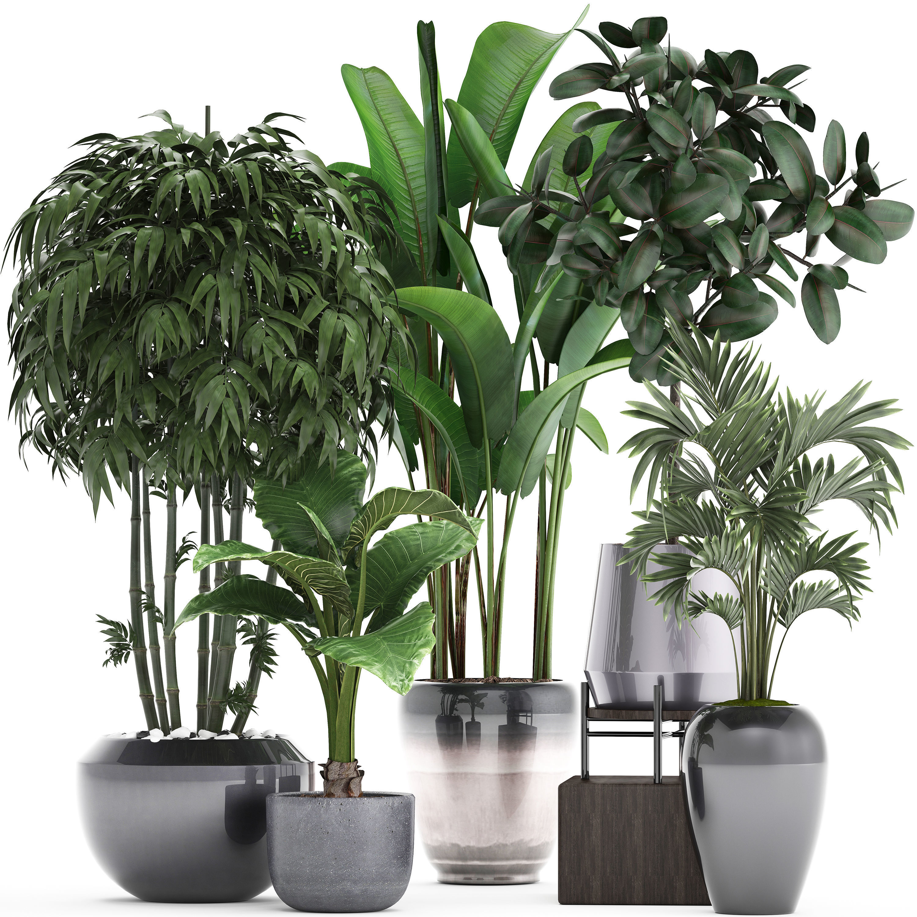 Collection of Exotic plants | 3D model