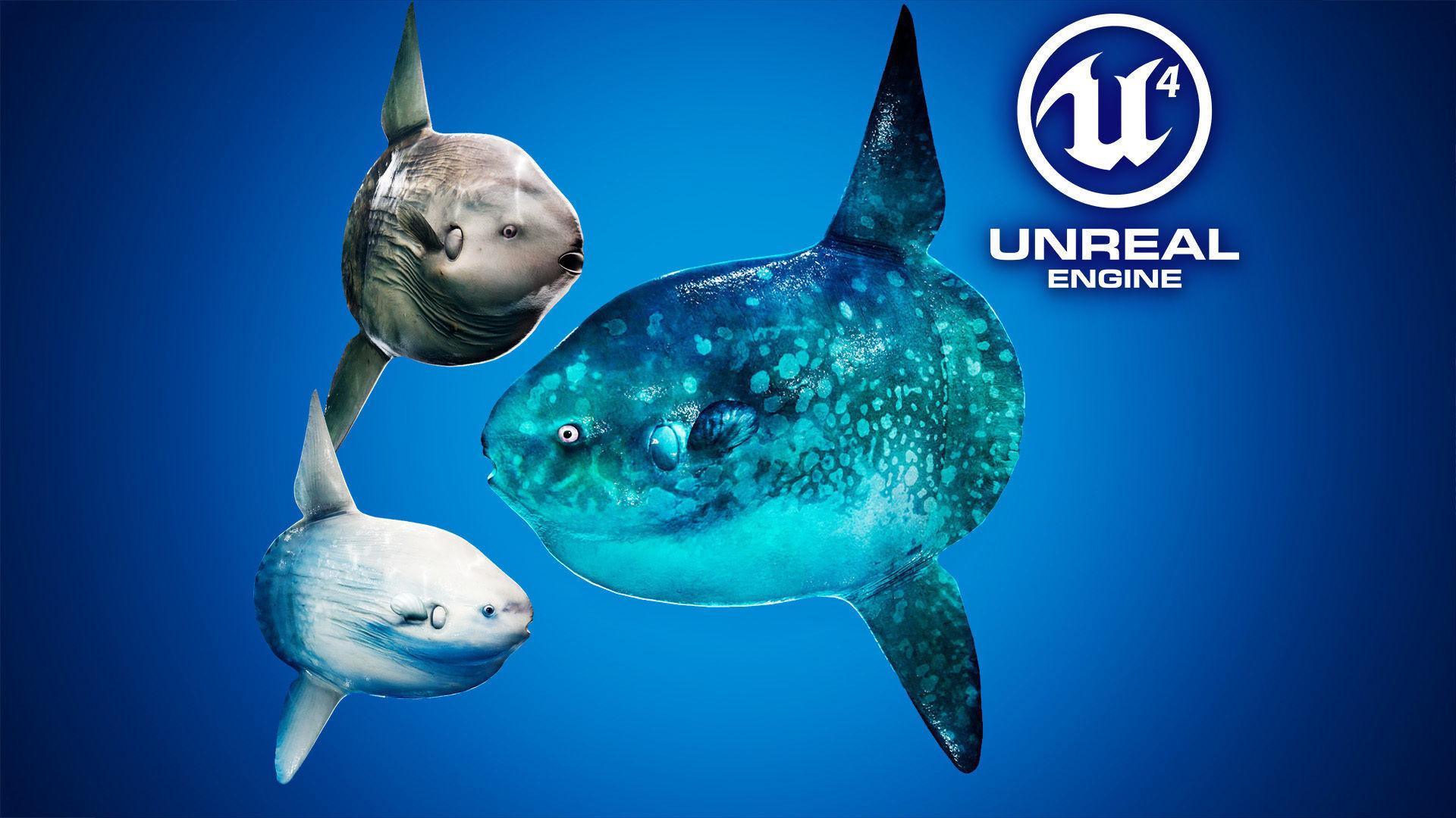 Ocean Sunfish Pack - UE4   3D model