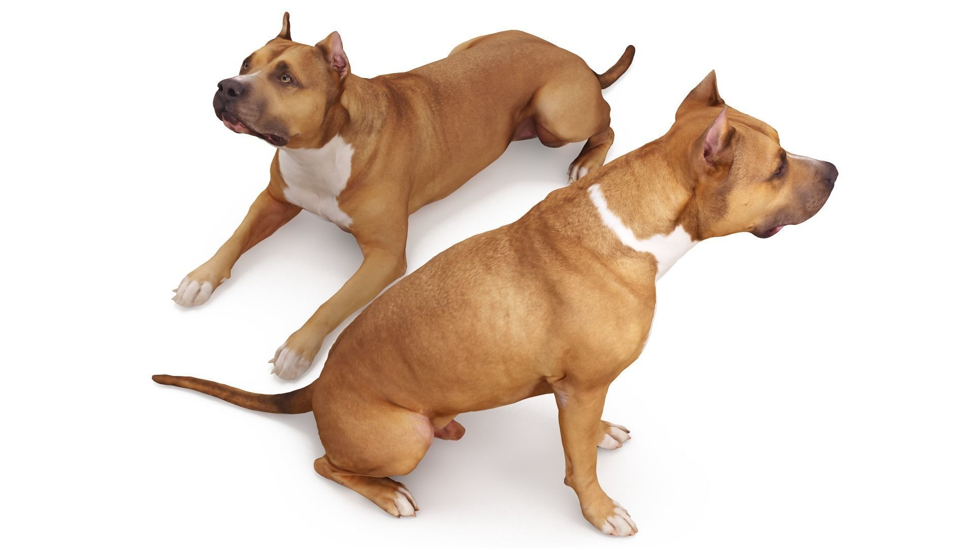Staffordshire Terrier Collection x2