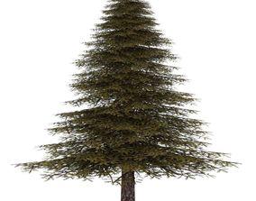 Fir Tree 3 3D model