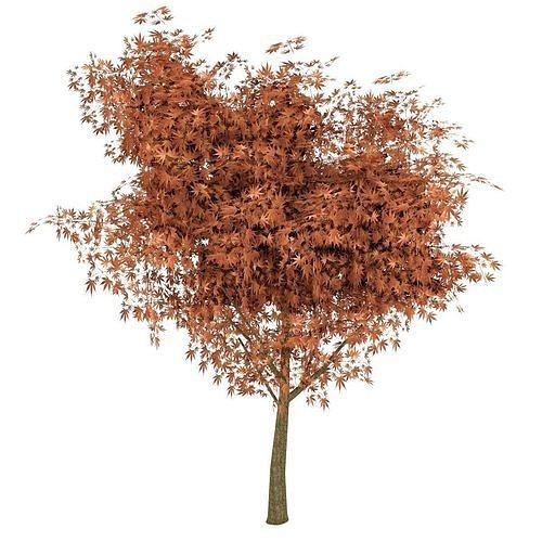 maple tree autumn 3d model obj mtl 3ds fbx blend tga 1