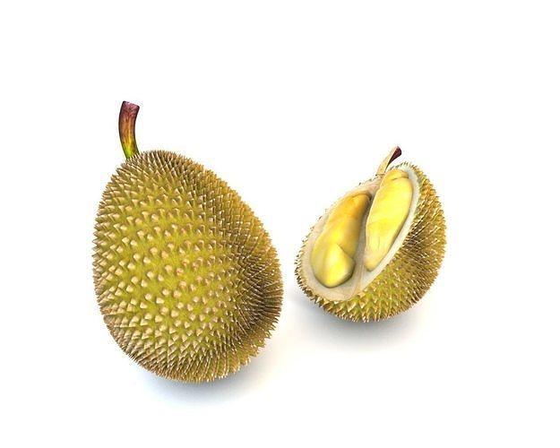 durian fruit 3d model obj mtl 3ds fbx c4d stl dae 1