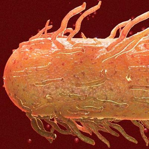 E Coli Reptiles e coli 3D Models - CGT...