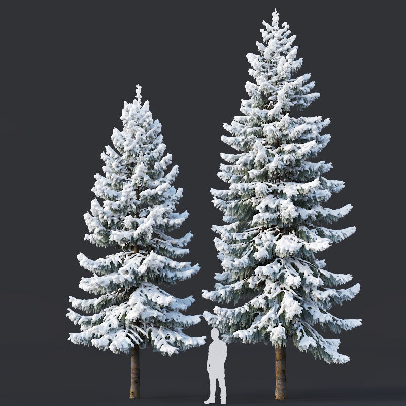 Spruce Nr 6 Two sizes H8-10m Modular branches