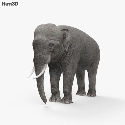 asian elephant hd 3d model max obj mtl 3ds fbx c4d lwo lw lws 1