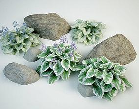3D model Brunnera macrophylla Siberian bugloss