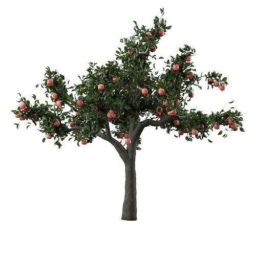 hd apple tree 3d model max obj mtl fbx 1