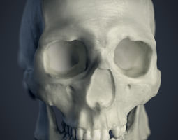 cranial facial reconstruction - european male skull scan 3d print model