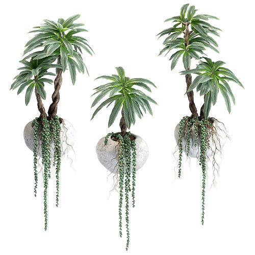 hanging succulents and palm with roots in wall concrete pots 3d model max obj mtl fbx 1