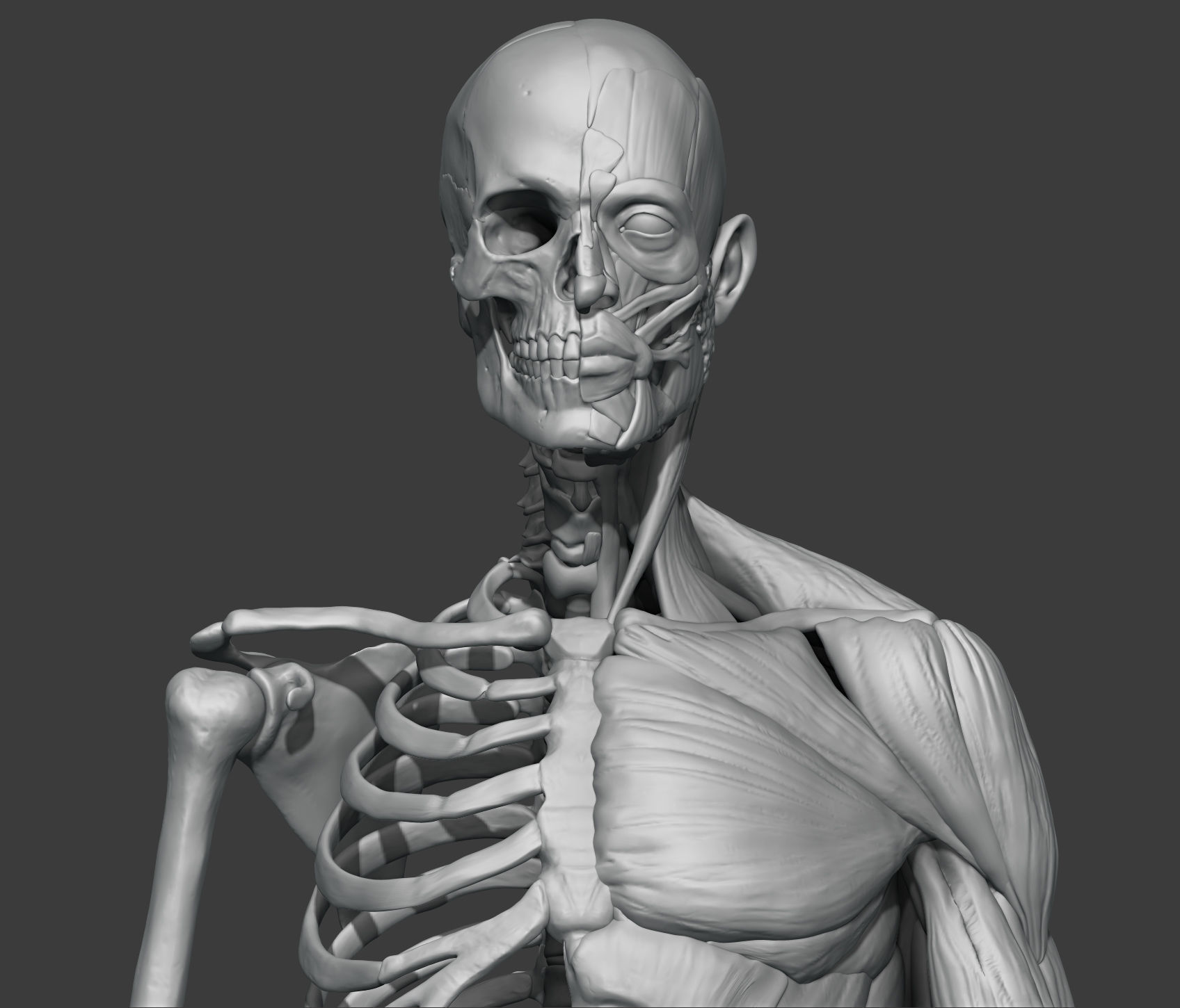 Skeleton and muscules