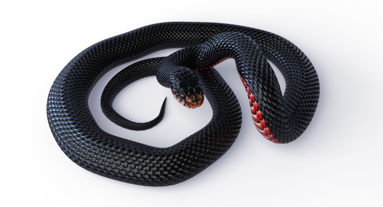 Animated Red Bellied Black Snake