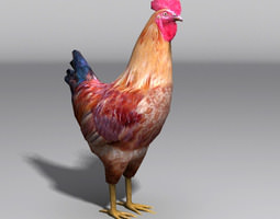3d model rooster VR / AR ready