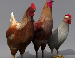 3D asset Rooster and Hens