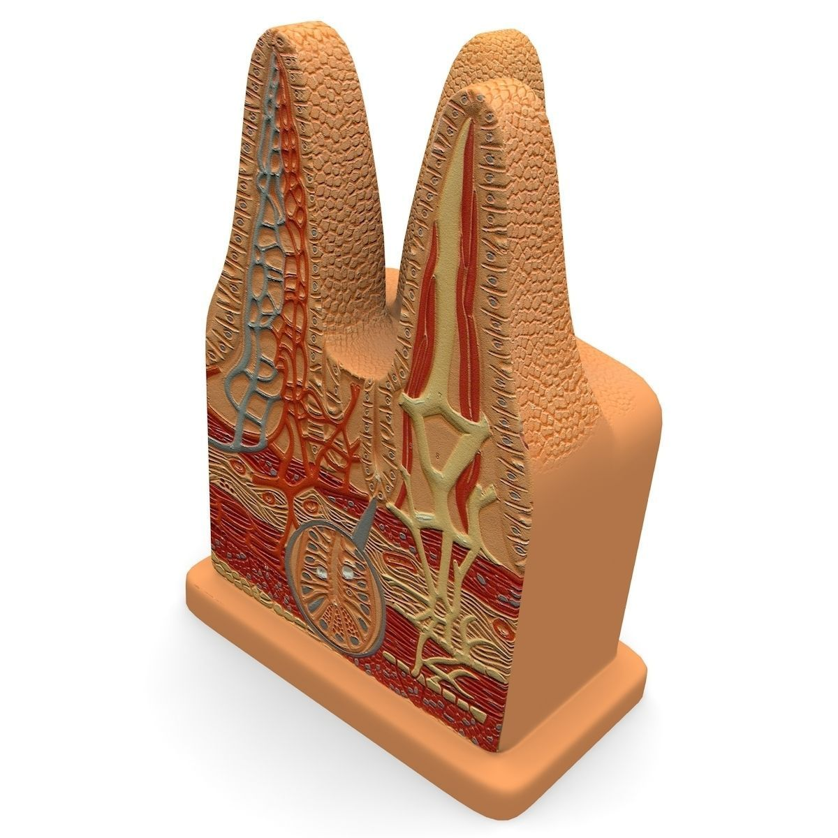 Microbiology Digestive Villi Intestinal 3d Model Cgtrader