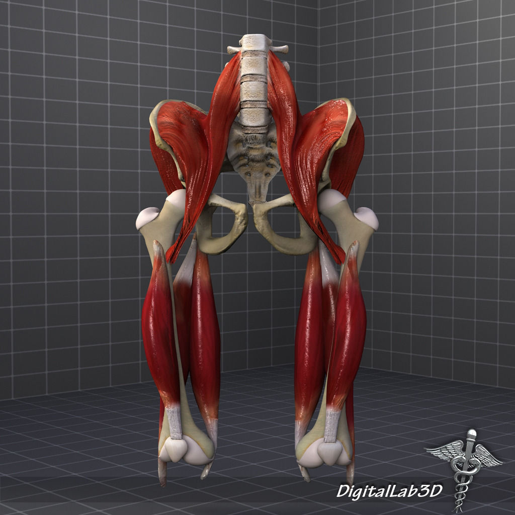 Female anatomy 3d