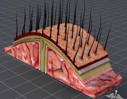 Human Scalp Anatomy 3D Model