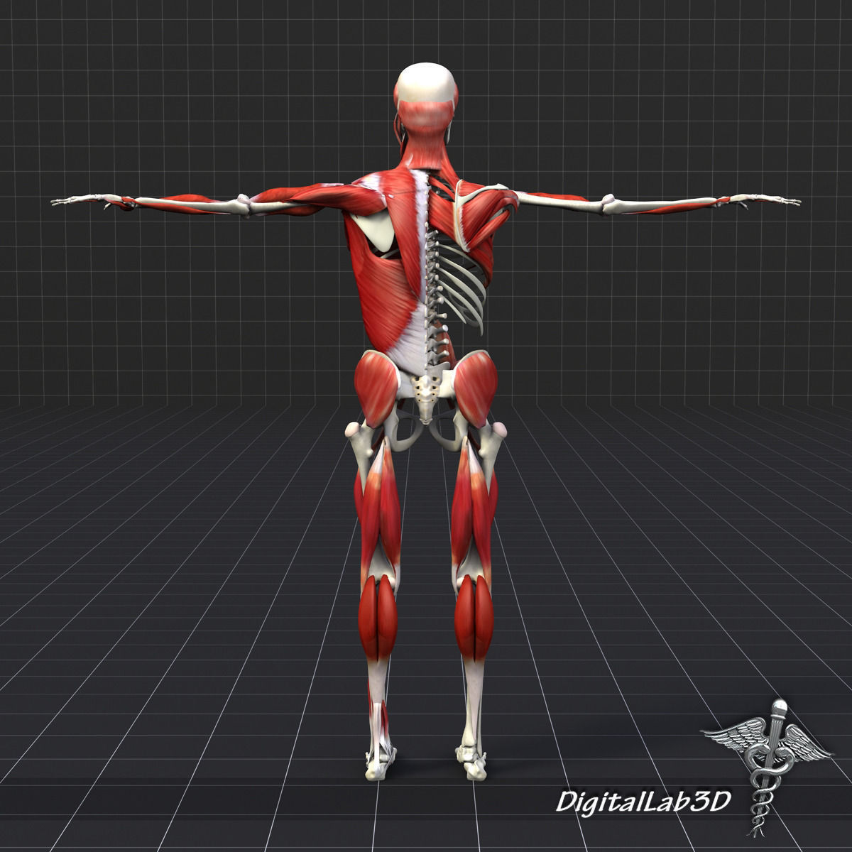 100 3d Model Human Female Muscular Male