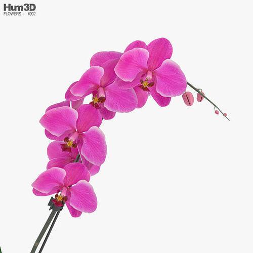 orchid 3d model max obj mtl 3ds fbx c4d lwo lw lws 1